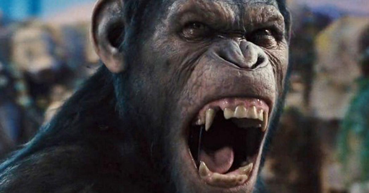 un cesare furioso mostra i denti a un nemico - nerdface
