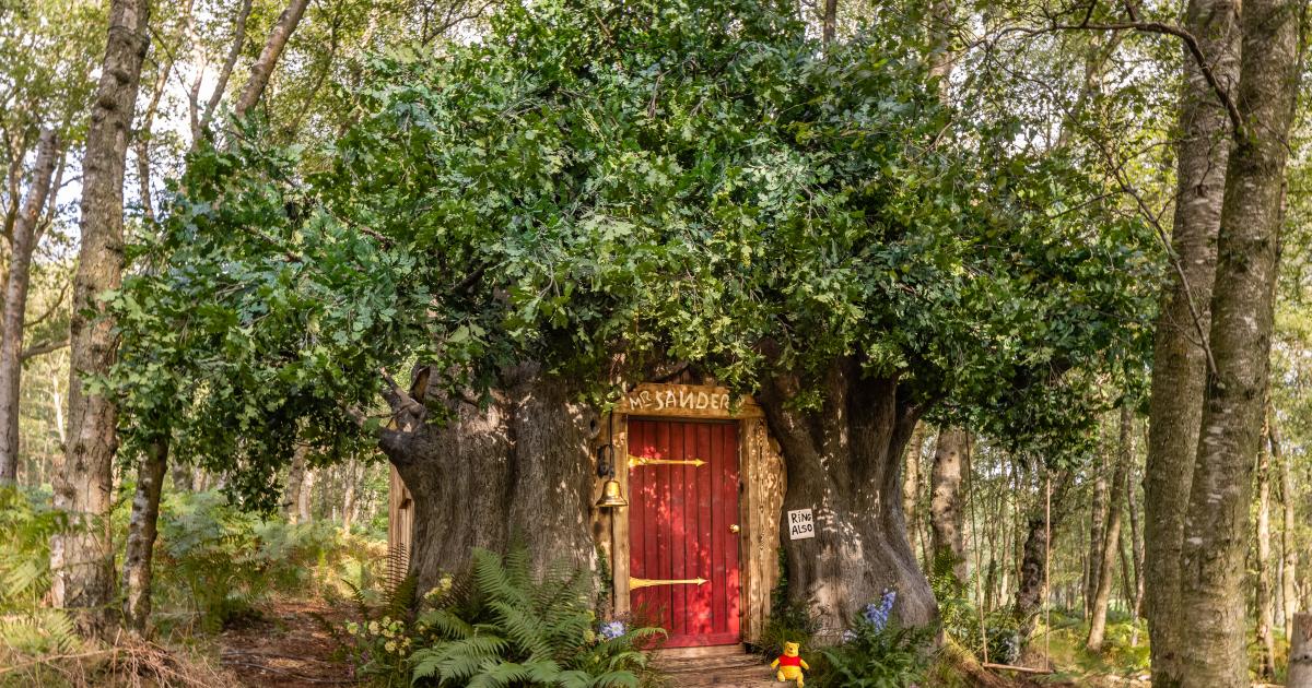l'esterno della casa costruita nell'albero - nerdface